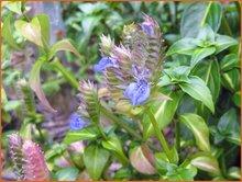 Champignonplant