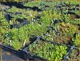Mix van 12 planten voor € 1,30 per stuk_12
